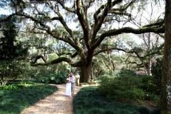 Washington-Oaks-Live-Oak-Tree-scaled