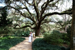 Washington-Oaks-Live-Oak-Tree-scaled